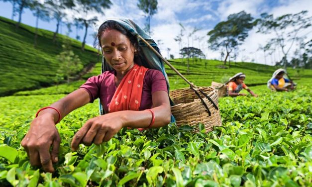 Transforming how tea is bought and sold in Sri Lanka