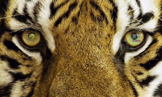 Iress (eyes) of the Tiger to provide direct access to Singapore stock exchange